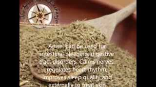 Anise Benefits And Side Effects, Medical Herbs in Egypt