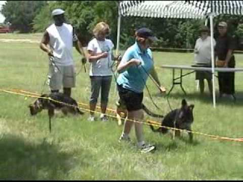 Dog Conformation Show Youtube
