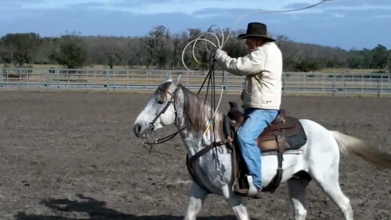 Florida Cracker Horses Demonstrate Proper Roping Etiquette Youtube