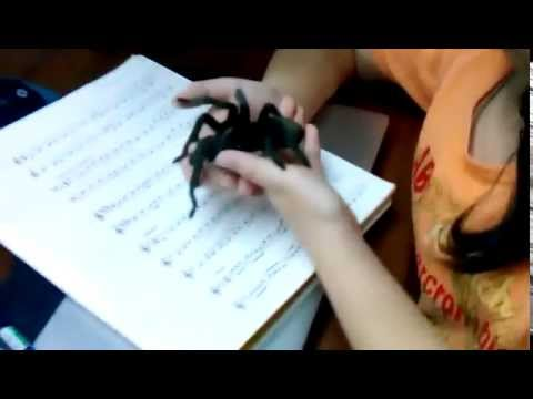 My awesome Brazilian black tarantula!