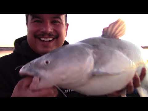 Dragging For Reservoir Blue Catfish-Fishing For Catfish-How to Catch Lake Catfish