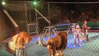 Львы атакуют дрессировщика в цирке!! детям и слабонервным не смотреть