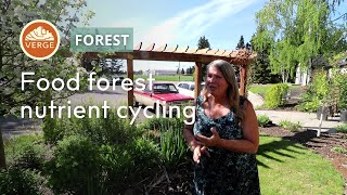 Food Forest Maintenance: How to Manage Nutrient Cycles