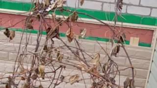 монтаж цокольного сайдинга видео