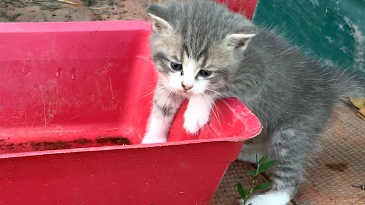 Baby Kittens want to bath in a basin of rainwater on the street