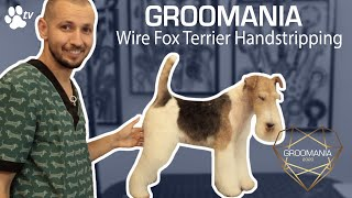 Wire Fox Terrier Handstripping with Costin Stoica | Groomania 2020 Grooming Demonstration