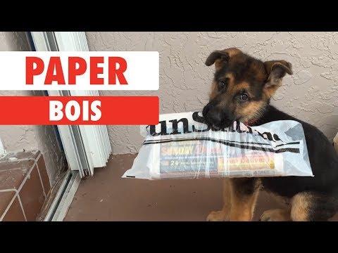 Paper Bois