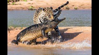 Мир животных Дикая природа Амазонки Документальный фильм National Geographic