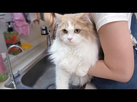 스스로 목욕하러 온 근엄한 고양이 [크림목욕탕]