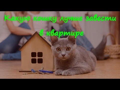 Какую кошку лучше завести в квартире What kind of cat it is better to have in the apartment