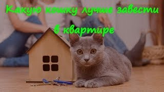 Какую кошку лучше завести в квартире  What kind of cat it is better to have in the apartment