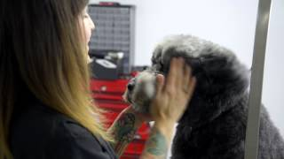 Nice Diggz Dog Grooming And Dog Daycare | 647-867-dogg (3644) | Cage Free Pet Sitting