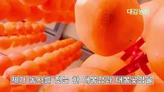 대봉곶감과 대봉감을 생산하는 대감농원