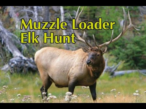 Colorado Muzzle Loader Elk Hunt