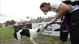 Large Dog Agility Winner - 2013 Purina® Pro Plan® Incredible Dog Challenge Eastern Regionals