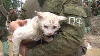 Военные строят дамбу. Один из бойцов снимает с дерева мокрого  белого кота кричащего от ужаса.