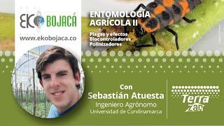 Eko Bojacá | Capacitación virtual | Entomología Agrícola II