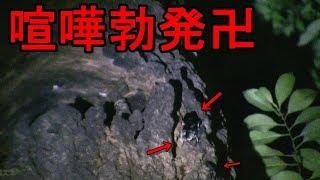 2018(夏) 昆虫採集リスト↓ 【 2018(夏) 昆虫採集】:https://www.youtube...