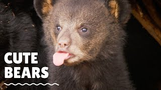 Youtube Top10 Cutest Grizzy Bears Movements