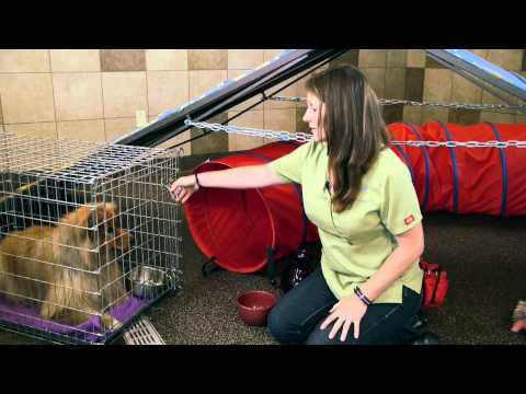 how-to-teach-a-dog-to-eat-from-the-bowl-:-dog-training