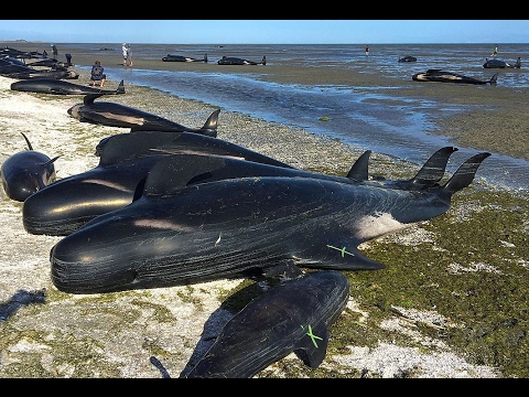 prekiauti banginių bitkoinais