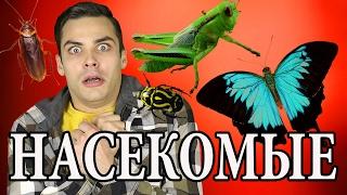 10 ИНТЕРЕСНЫХ ФАКТОВ ПРО НАСЕКОМЫХ(В этом ролике я хочу рассказать вам про маленьких но многочисленных обитателях нашего мира - про насекомых...., 2017-02-17T14:00:05.000Z)