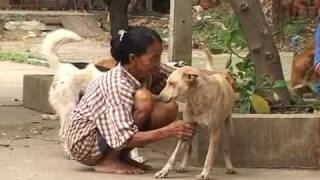 Stray Dogs at The Mercy Of Thais