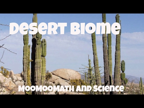 Desert Biome Facts