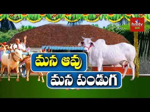 Desi Cow Importance in Agriculture | hmtv Agri