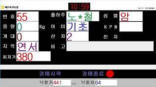 예천축산농협 03월  05일 경매가축시장