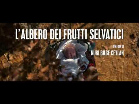 L'albero dei frutti selvatici di Nuri Bigle Ceylan - trailer italiano ufficiale