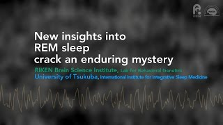 New insights into REM sleep crack an enduring mystery