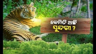 Suspense Over Tigress Sundari Health Condition