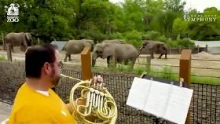 The Kansas City Symphony visits the Zoo!