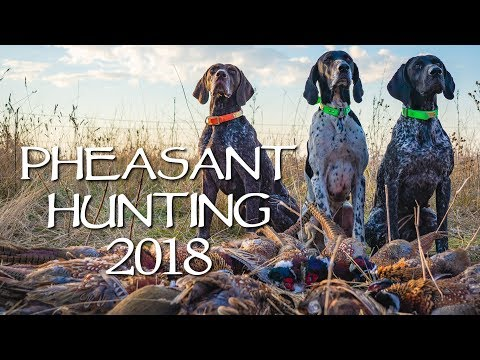 South Dakota Pheasant Hunt 2018