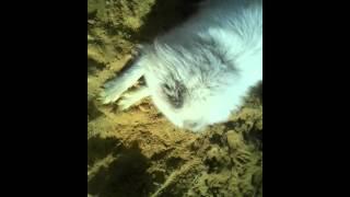 Парода самоед лайка хаска роет яму