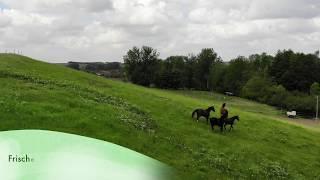 Koppeln vom Reiterhof Teicha