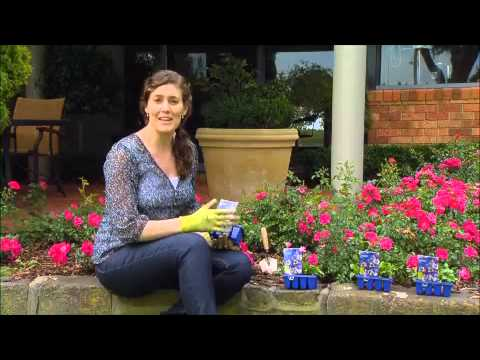 The Garden Gurus - Plant Violas Now