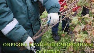 Правильная обрезка груши весной: подробная схема, фото и видео инструкции