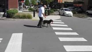 Real World Dog Training With Pak Masters