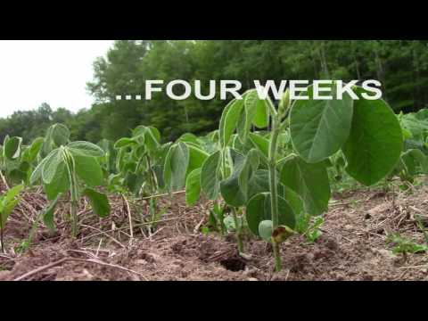 The non-GMO Soybean Project