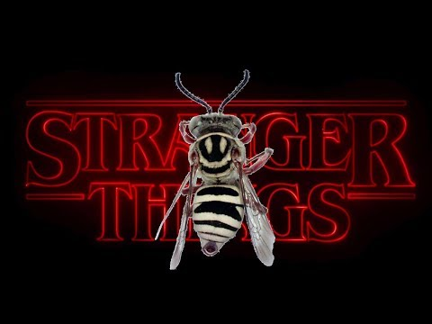 Stranger things and the bees in your backyard