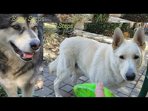 Bruno is Full of Energy and Likes to Play & Play | Dog is Obsessed with Playing Fetch