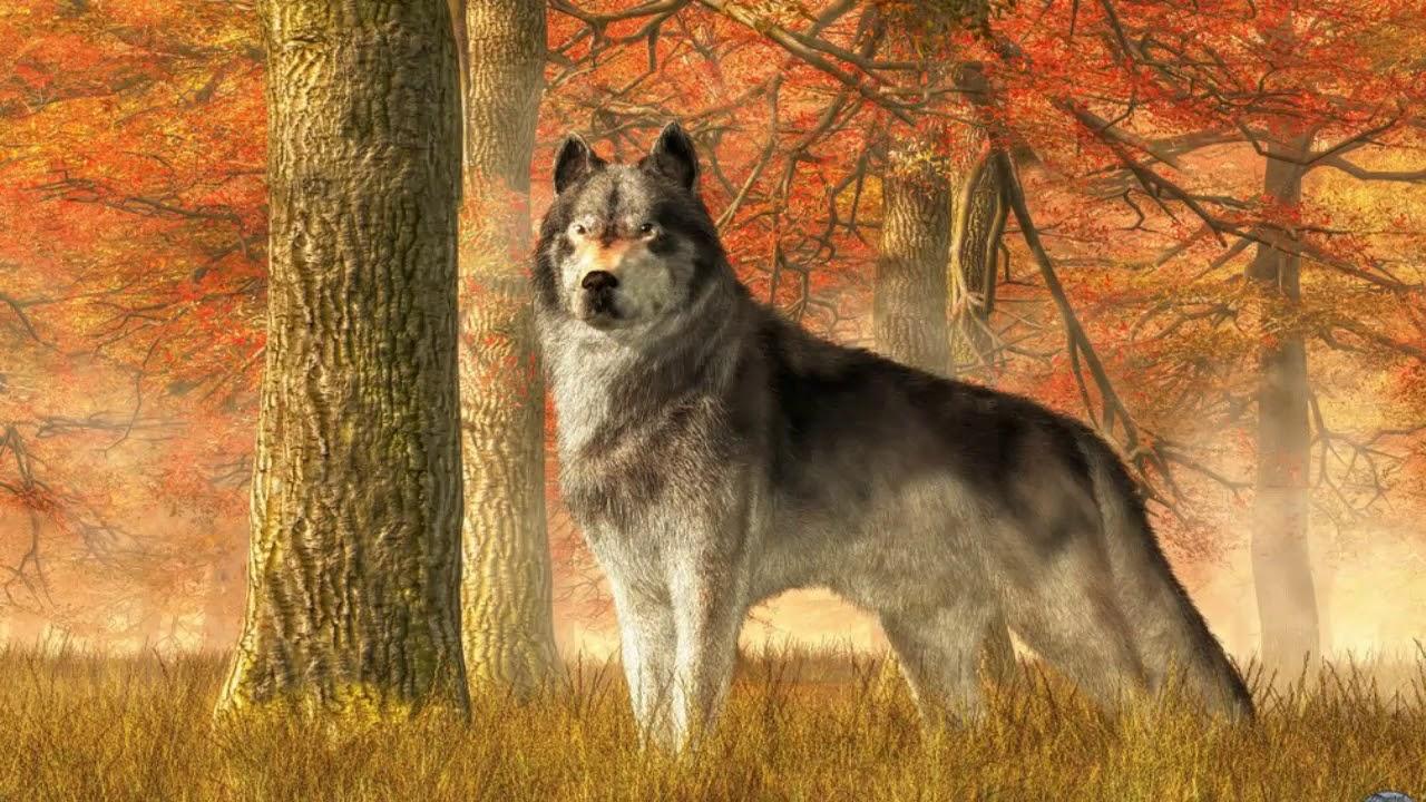 осенний лес картинки с волками поможет