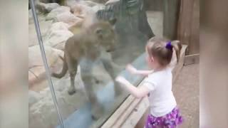 Funny Baby and Animals     Funny Baby Fails Video