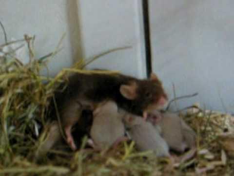 Tiny mice II