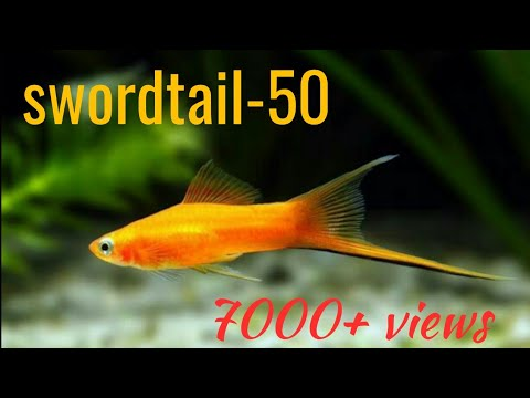 Aquarium Fish Prices With Names Part 1 Youtube