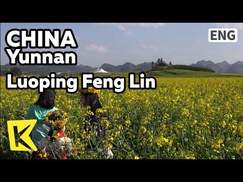 【K】China Travel-Yunnan[중국 여행-윈난]중국에서 제일 아름다운 유채꽃밭 뤄핑펑린/Yunnan/Luoping Feng Lin/Rape Flower