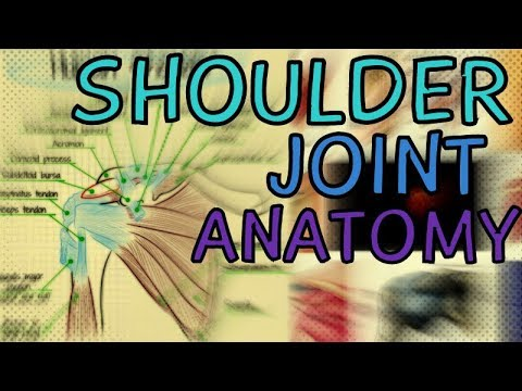 Shoulder Joint Anatomy and Function - Glenohumeral Joint - Capsule - Bursae - Movement
