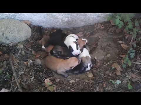 rd #197 Newborn puppies in the backyard